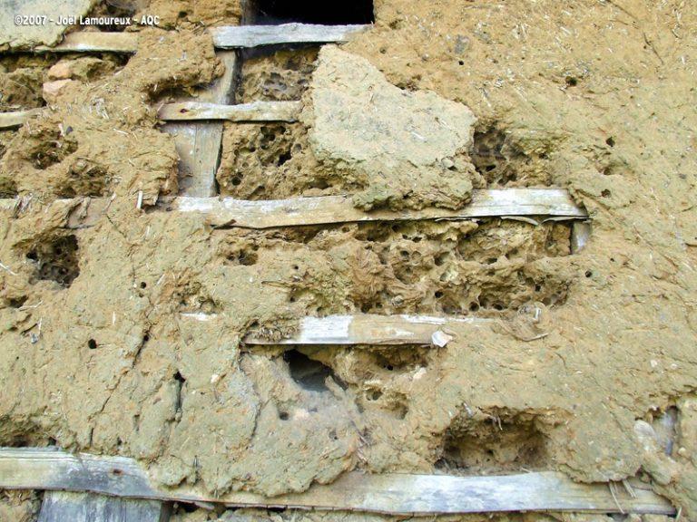 Détérioration du torchis d'un mur à pans de bois
