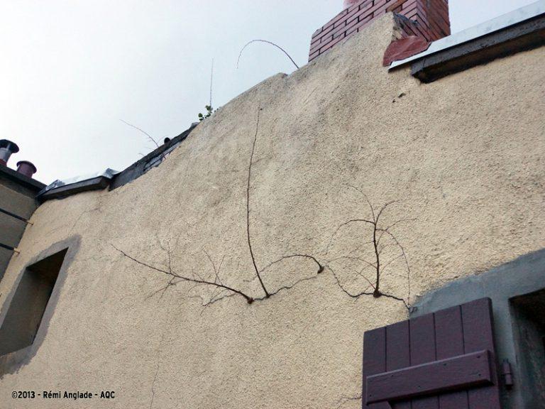 Pousses d'arbres dans une fissure