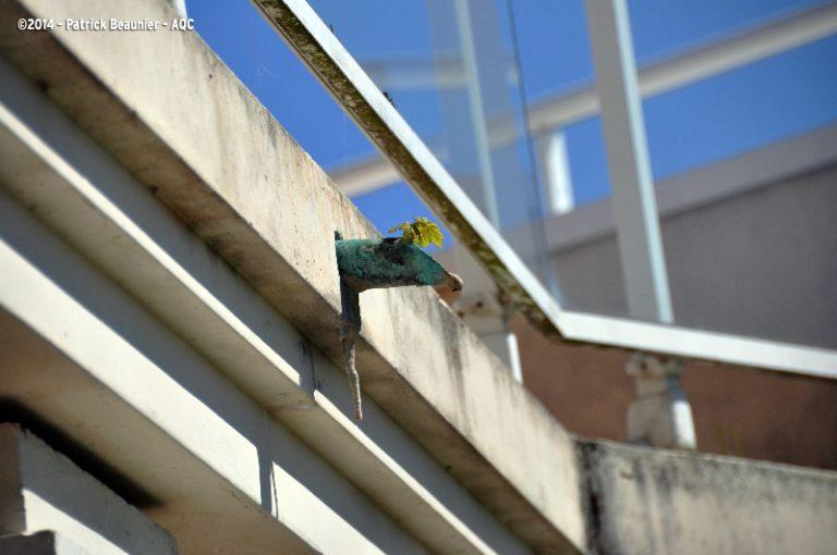 Absence d'entretien sur une terrasse