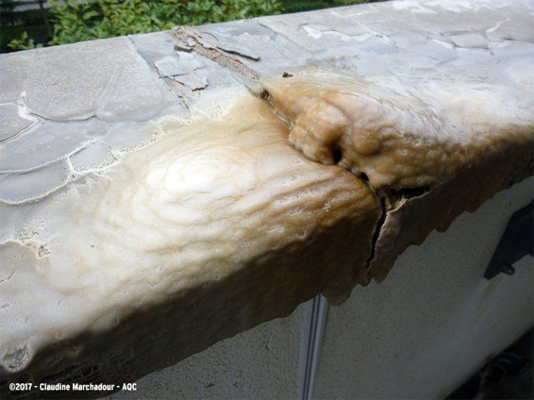 Concrétion calcite