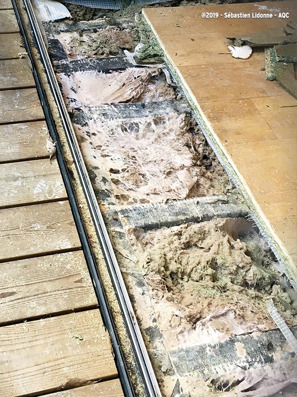 Développement de mérule sous plancher bois